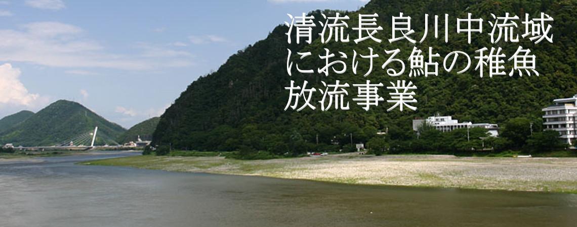 清流長良川中流域における鮎の稚魚放流事業